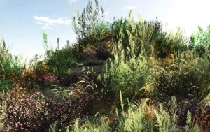 3D Photorealistic: Vegetation